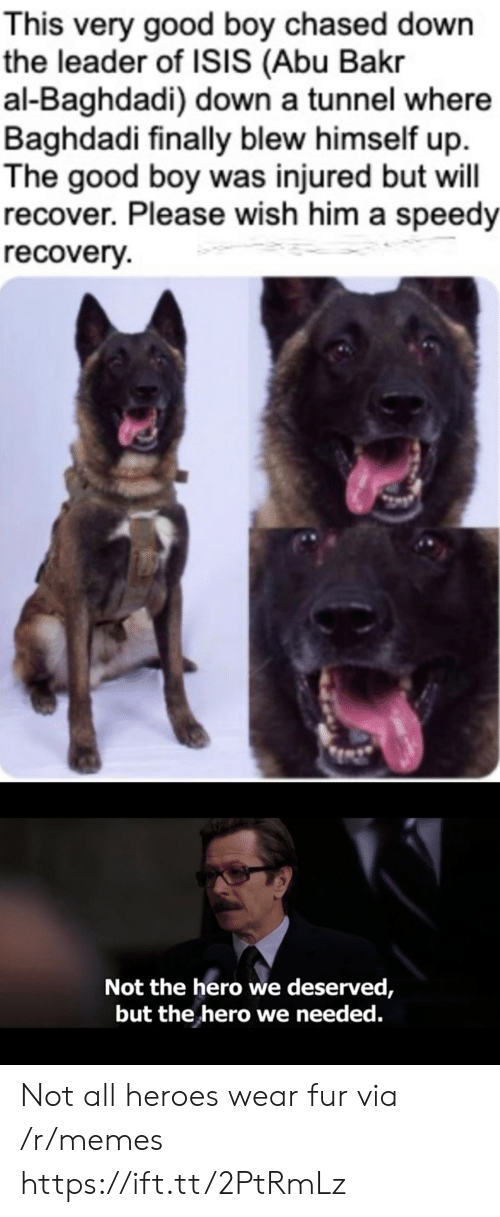 Isis, Memes, and Good: This very good boy chased down  the leader of ISIS (Abu Bakr  al-Baghdadi) down a tunnel where  Baghdadi finally blew himself up  The good boy was injured but will  recover. Please wish him a speedy  recovery  Not the hero we deserved,  but the hero we needed. Not all heroes wear fur via /r/memes https://ift.tt/2PtRmLz