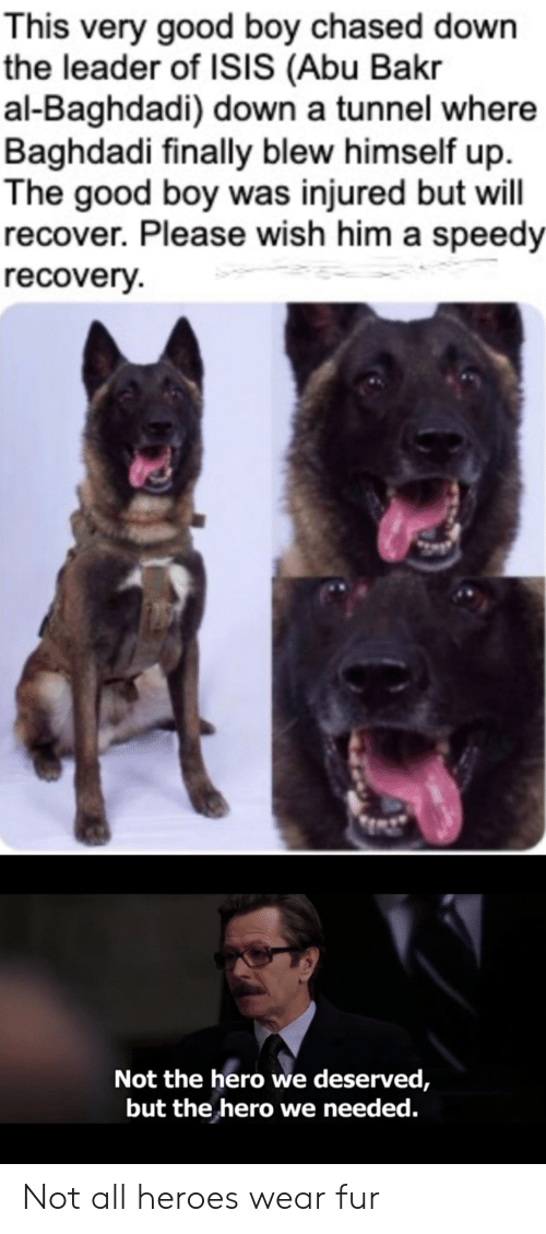 Isis, Good, and Heroes: This very good boy chased down  the leader of ISIS (Abu Bakr  al-Baghdadi) down a tunnel where  Baghdadi finally blew himself up  The good boy was injured but will  recover. Please wish him a speedy  recovery  Not the hero we deserved,  but the hero we needed. Not all heroes wear fur