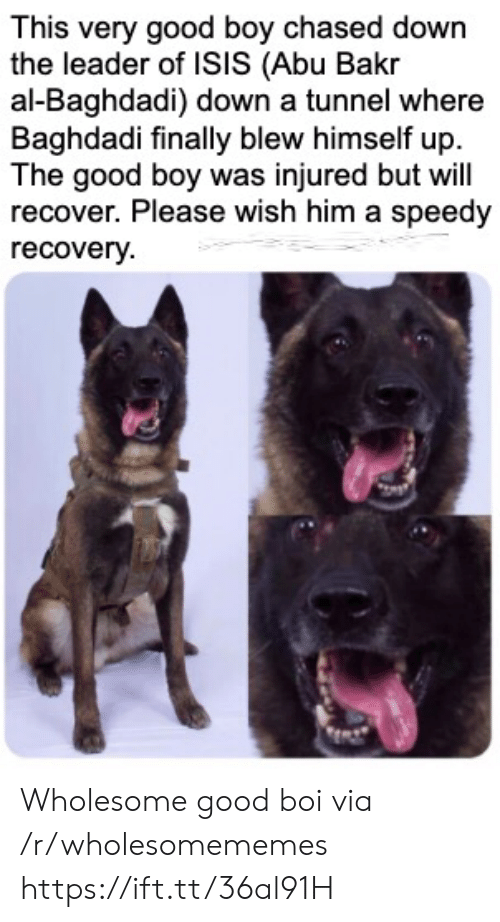Isis, Good, and Wholesome: This very good boy chased down  the leader of ISIS (Abu Bakr  al-Baghdadi) down a tunnel where  Baghdadi finally blew himself up  The good boy was injured but will  recover. Please wish him a speedy  recovery Wholesome good boi via /r/wholesomememes https://ift.tt/36al91H