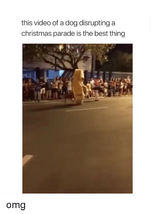 Christmas, Omg, and Best: this video of a dog disrupting a  christmas parade is the best thing omg
