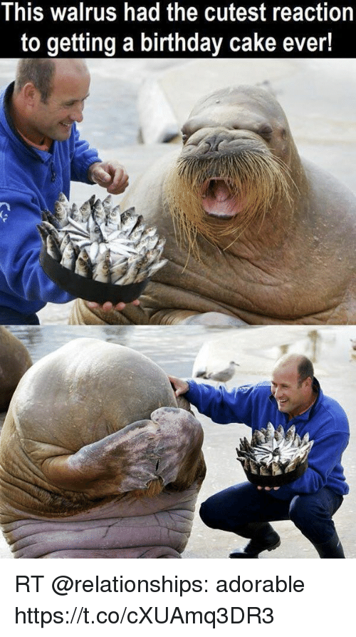 This Walrus Had The Cutest Reaction To Getting A Birthday Cake Ever