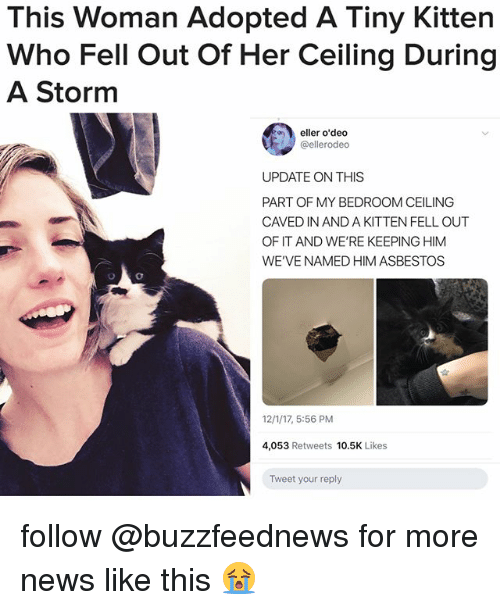 News, Relatable, and Her: This Woman Adopted A Tiny Kitten  Who Fell Out Of Her Ceiling During  A Storm  eller o'dedo  @ellerodeo  UPDATE ON THIS  PART OF MY BEDROOM CEILING  CAVED IN AND A KITTEN FELL OUT  OF IT AND WE'RE KEEPING HIM  WE'VE NAMED HIM ASBESTOS  12/1/17, 5:56 PM  4,053 Retweets 10.5K Likes  Tweet your reply follow @buzzfeednews for more news like this 😭