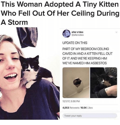 Her, Asbestos, and Storm: This Woman Adopted A Tiny Kitten  Who Fell Out Of Her Ceiling During  A Storm  eller o'deo  @ellerodeo  UPDATE ON THIS  PART OF MY BEDROOM CEILING  CAVED IN AND A KITTEN FELL OUT  OF IT AND WE'RE KEEPING HIM  WE'VE NAMED HIM ASBESTOS  12/1/17, 5:56 PM  4,053 Retweets 10.5K Likes  Tweet your reply