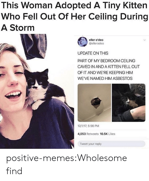 Memes, Target, and Tumblr: This Woman Adopted A Tiny Kitten  Who Fell Out Of Her Ceiling During  A Storm  eller o'deo  @ellerodeo  UPDATE ON THIS  PART OF MY BEDROOM CEILING  CAVED IN AND A KITTEN FELL OUT  OF IT AND WE'RE KEEPING HIM  WE'VE NAMED HIM ASBESTOS  12/1/17, 5:56 PM  4,053 Retweets 10.5K Likes  Tweet your reply positive-memes:Wholesome find