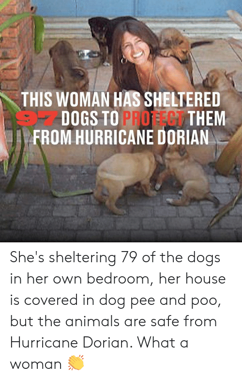 Animals, Dank, and Dogs: THIS WOMAN HAS SHELTERED  DOGS TO PROFEG THEM  FROM HURRICANE DORIAN She's sheltering 79 of the dogs in her own bedroom, her house is covered in dog pee and poo, but the animals are safe from Hurricane Dorian. What a woman �