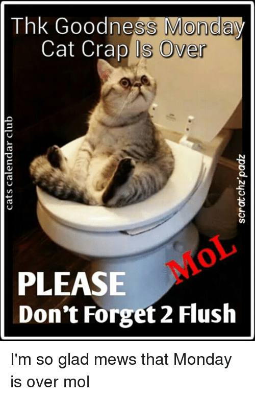Thk Goodness Morn Cat Crap Ls Over Please Dont Forget 2 Flush Im