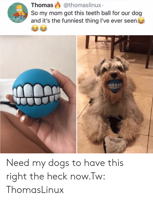 Dogs, Mom, and Got: Thomas @thomaslinux  So my mom got this teeth ball for our dog  and it's the funniest thing I've ever seen  83 2 Need my dogs to have this right the heck now.Tw: ThomasLinux