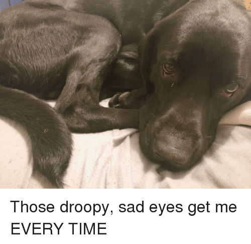 Time, Sad, and Droopy: Those droopy, sad eyes get me EVERY TIME