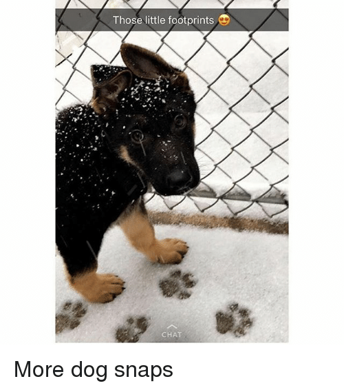 Funny, Chat, and Dog: Those little footprints  CHAT More dog snaps