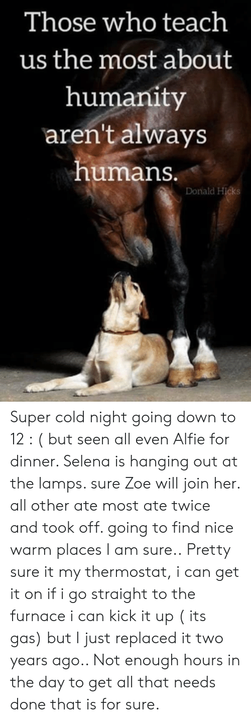 Memes, Selena, and Cold: Those who teach  us the most about  humanity  aren't always  humans.  Donald Hicks Super cold night going down to 12 : ( but seen all even Alfie for dinner.  Selena is hanging out at the lamps. sure Zoe will  join her. all other ate most ate twice and took off. going to find nice warm places  I am sure.. Pretty sure it my  thermostat,  i can get it on if i go straight to the furnace i can kick it up ( its gas)    but I just replaced it two years ago..  Not enough hours in the day to get all that needs done that is for sure.