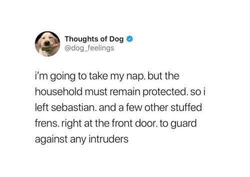 Dog, Intruders, and Sebastian: Thoughts of Dog 0  @dog_feelings  i'm going to take my nap. but the  household must remain protected. so i  left sebastian. and a few other stuffed  frens.right at the front door. to guard  against any intruders