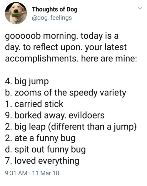 Funny, Today, and Dog: Thoughts of Dog  @dog_feelings  gooooob morning. today is a  day. to reflect upon. your latest  accomplishments. here are mine  4. big jump  b. zooms of the speedy variety  1. carried stick  9. borked away. evildoers  2. big leap (different than a jump)  2. ate a funny bug  d. spit out funny bug  7. loved everything  9:31 AM 11 Mar 18