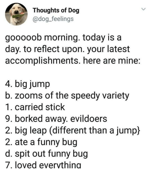 Funny, Today, and Dog: Thoughts of Dog  @dog_feelings  gooooob morning. today is a  day. to reflect upon. your latest  accomplishments. here are mine:  4. big jump  zooms of the speedy variety  1. carried stick  9. borked away. evildoers  2. big leap (different than a jump)  2. ate a funny bug  d. spit out funny bug  7, loved evervthing