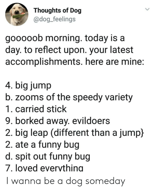 Funny, Today, and Dog: Thoughts of Dog  @dog_feelings  gooooob morning. today is a  day. to reflect upon. your latest  accomplishments. here are mine:  4. big jump  b. zooms of the speedy variety  1. carried stick  9. borked away. evildoers  2. big leap (different than a jump)  2. ate a funny bug  d. spit out funny bug  7. loved everything I wanna be a dog someday