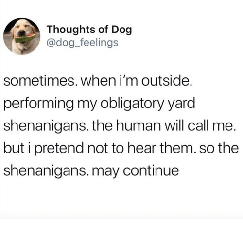 Shenanigans, Dog, and Human: Thoughts of Dog  @dog_feelings  sometimes. when i'm outside.  performing my obligatory yard  shenanigans. the human will call me.  but i pretend not to hear them. so the  shenanigans.may continue