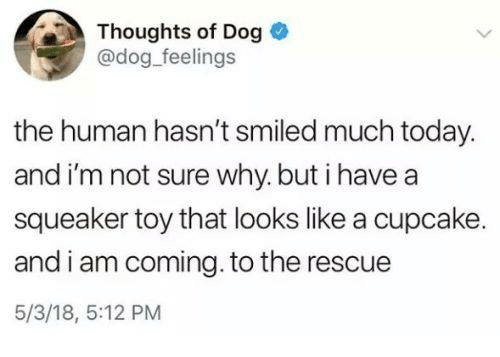 Today, Dog, and Human: Thoughts of Dog  @dog feelings  the human hasn't smiled much today.  and i'm not sure why.but i have a  squeaker toy that looks like a cupcake  and i am coming. to the rescue  5/3/18, 5:12 PM