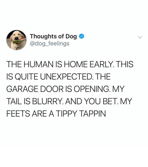 Memes, Home, and Quite: Thoughts of Dog  @dog_feelings  THE HUMAN IS HOME EARLY. THIS  IS QUITE UNEXPECTED. THE  GARAGE DOOR IS OPENING. MY  TAIL IS BLURRY. AND YOU BET. MY  FEETS ARE A TIPPY TAPPIN ᵖ ᶦ ᵗ ᵗ ᵉ ʳ ᵖ ᵃ ᵗ ᵗ ᵉ ʳ ᶦ ⁿ ᵗ ᵉ ⁿ ˢ ᶦ ᶠ ᶦ ᵉ ˢ