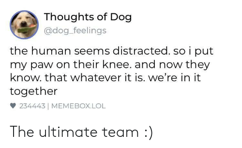 Lol, Dog, and Human: Thoughts of Dog  @dog_feelings  the human seems distracted. so i put  my paw on their knee. and now they  know. that whatever it is. we're in it  together  雙234443 | MEMEBOX.LOL The ultimate team :)