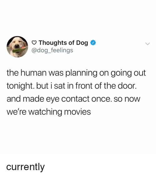 Memes, Movies, and 🤖: Thoughts of Dog  @dog_feelings  the human was planning on going out  tonight. but i sat in front of the door  and made eye contact once. so now  we're watching movies currently