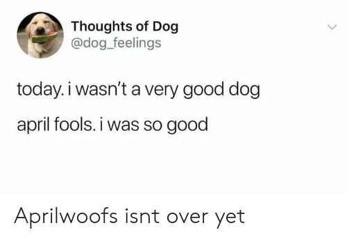 Good, Today, and April Fools: Thoughts of Dog  @dog_feelings  today.i wasn't a very good dog  april fools. i was so good Aprilwoofs isnt over yet