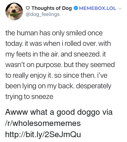 Lol, Good, and Http: Thoughts of Dog OMEMEBOX.LOL  @dog_feelings  the human has only smiled once  today. it was when irolled over. with  my feets in the air. and sneezed. it  wasn't on purpose. but they seemed  to really enjoy it. so since then. i've  been lying on my back. desperately  trying to sneeze Awww what a good doggo via /r/wholesomememes http://bit.ly/2SeJmQu