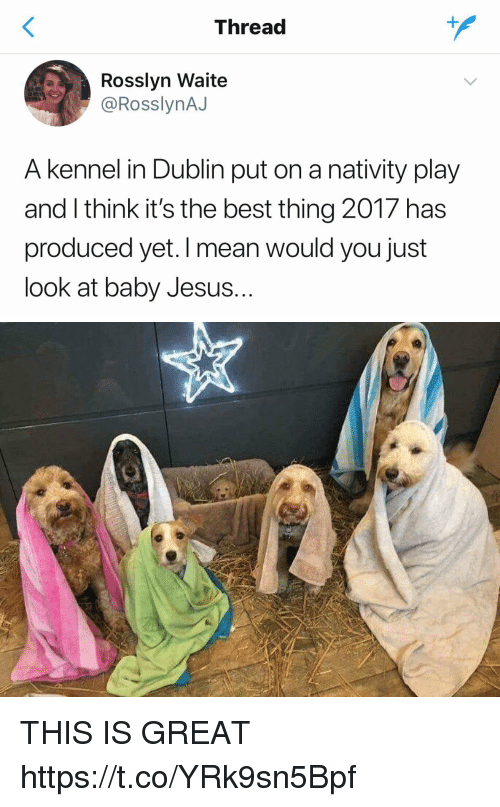 Jesus, Best, and Mean: Thread  Rosslyn Waite  @RosslynAJ  A kennel in Dublin put on a nativity play  and I think it's the best thing 2017 has  produced yet. I mean would you just  look at baby Jesus.. THIS IS GREAT https://t.co/YRk9sn5Bpf