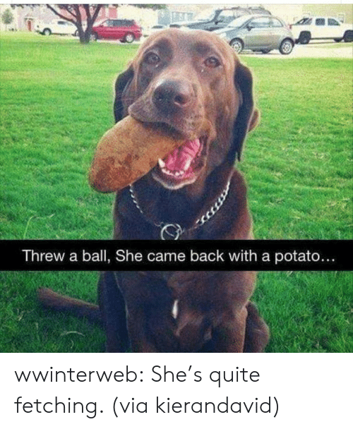 Reddit, Target, and Tumblr: Threw a ball, She came back with a potato... wwinterweb:  She's quite fetching. (via kierandavid)
