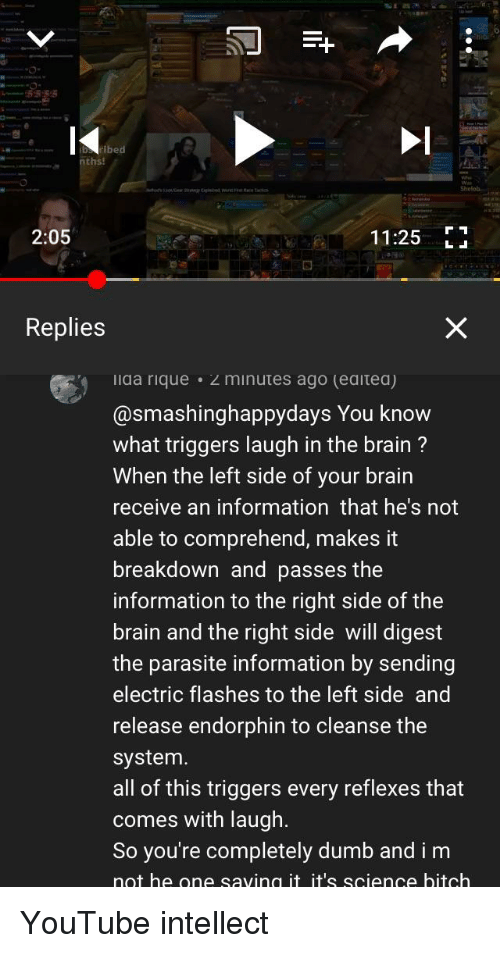 Bitch, Dumb, and youtube.com: ths!  2:05  11:25 E  Replies  ida rique 2 minutes ago (eaitea)  @smashinghappydays You know  what triggers laugh in the brain?  When the left side of your brain  receive an information that he's not  able to comprehend, makes it  breakdown and passes the  information to the right side of the  brain and the right side will digest  the parasite information by sending  electric flashes to the left side and  release endorphin to cleanse the  system  all of this triggers every reflexes that  comes with laugh  So you're completely dumb and i m  not he one saving it it's science bitch
