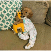 Memes, Puppies, and Puppy: <>or Puppy in a onesie. You're welcome.