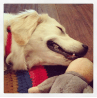 <blockquote> <p>Big fan of the Three Stooges chew toy. #Gary</p> </blockquote>: <blockquote> <p>Big fan of the Three Stooges chew toy. #Gary</p> </blockquote>
