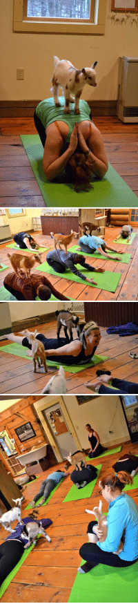 Yoga, Baby, and Baby Goats: <h2>Yoga with baby goats</h2>