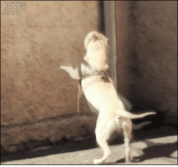 <h3><strong>Prince of Persia: Dogs DLC</strong></h3>: <h3><strong>Prince of Persia: Dogs DLC</strong></h3>