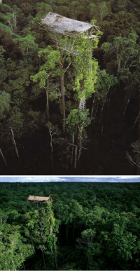 """Crying, Tumblr, and Lost: <p><a class=""""tumblr_blog"""" href=""""http://atavus.co/post/36751853464/the-korowai-treehouses-via-my-modern-met"""">atavus</a>:</p> <blockquote> <p>The Korowai Treehouses</p> <p><small>Via [<a href=""""http://www.mymodernmet.com/profiles/blogs/korowai-tribe-treehouses"""">My Modern Met</a>]</small></p> <p><small><span>Images via [</span><a href=""""http://www.lostateminor.com/2012/11/28/incredible-tree-houses-of-new-guineas-korowai-tribe/"""" rel=""""nofollow"""">Lost At E Minor</a><span>,</span><a href=""""http://www.georgesteinmetz.com/"""" rel=""""nofollow"""">George Steinmetz</a><span>]</span></small></p> </blockquote> <p>The part of my brain that&rsquo;s scared of heights just started screaming and crying&hellip;.</p>"""
