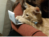 """<p><a class=""""tumblr_blog"""" href=""""http://awwww-cute.tumblr.com/post/104243656675/kitty-and-his-tiny-computer"""" target=""""_blank"""">awwww-cute</a>:</p> <blockquote> <p>Kitty and his tiny computer</p> </blockquote>: <p><a class=""""tumblr_blog"""" href=""""http://awwww-cute.tumblr.com/post/104243656675/kitty-and-his-tiny-computer"""" target=""""_blank"""">awwww-cute</a>:</p> <blockquote> <p>Kitty and his tiny computer</p> </blockquote>"""