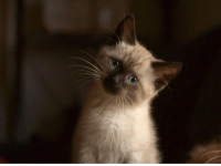 """<p><a class=""""tumblr_blog"""" href=""""http://cutecatoverlord.tumblr.com/post/147307769777"""">cutecatoverlord</a>:</p> <blockquote> <p>Sofie is never too sure of what face to make for the camera.<br/></p><p><a href=""""https://www.facebook.com/pictures.of.cute.animals/"""">More Cute Cats</a></p> </blockquote>: <p><a class=""""tumblr_blog"""" href=""""http://cutecatoverlord.tumblr.com/post/147307769777"""">cutecatoverlord</a>:</p> <blockquote> <p>Sofie is never too sure of what face to make for the camera.<br/></p><p><a href=""""https://www.facebook.com/pictures.of.cute.animals/"""">More Cute Cats</a></p> </blockquote>"""