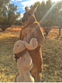 "Target, Tumblr, and Animal: <p><a href=""http://animalfactbook.com/post/116075667025/during-its-free-time-kangaroos-enjoy-weight"" class=""tumblr_blog"" target=""_blank"">animal-factbook</a>:</p>  <blockquote><p>During its free time, kangaroos enjoy weight lifting and occasionally you can spot them at body building contests across Australia. </p></blockquote>"