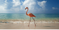 """Tumblr, Bahamas, and Blog: <p><a href=""""http://awesomacious.tumblr.com/post/171054685753/you-can-now-get-paid-to-hang-out-with-flamingos-in"""" class=""""tumblr_blog"""">awesomacious</a>:</p>  <blockquote><p>You Can Now Get Paid to Hang Out With Flamingos in the Bahamas</p></blockquote>"""