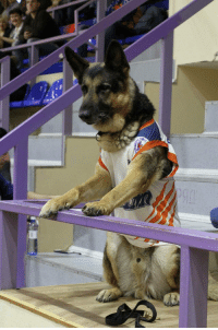 "Basketball, Tumblr, and Blog: <p><a href=""http://awesomacious.tumblr.com/post/172868528570/this-dog-came-to-every-match-of-our-basketball"" class=""tumblr_blog"">awesomacious</a>:</p>  <blockquote><p>This dog came to every match of our basketball team. Today team presented to him this uniform and a ticket to the VIP-zone</p></blockquote>"