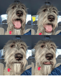 """<p><a href=""""http://awesomacious.tumblr.com/post/173244769865/his-facial-expressions-when-the-car-didnt-turn"""" class=""""tumblr_blog"""">awesomacious</a>:</p>  <blockquote><p>His facial expressions when the car didn't turn toward the dog park.</p></blockquote>: <p><a href=""""http://awesomacious.tumblr.com/post/173244769865/his-facial-expressions-when-the-car-didnt-turn"""" class=""""tumblr_blog"""">awesomacious</a>:</p>  <blockquote><p>His facial expressions when the car didn't turn toward the dog park.</p></blockquote>"""