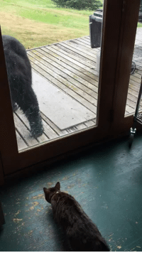 """<p><a href=""""http://badgerofshambles.tumblr.com/post/122418630812/thebestoftumbling-house-cat-scares-off-bear"""" class=""""tumblr_blog"""">badgerofshambles</a>:</p><blockquote> <p><a href=""""http://thebestoftumbling.com/post/122413708240/house-cat-scares-off-bear"""" class=""""tumblr_blog"""">thebestoftumbling</a>:</p>  <blockquote><p>house cat scares off bear</p></blockquote>  <p>""""That is the stupidest looking dog I've ever seen. I'm going to kick its ass.""""</p> </blockquote>: <p><a href=""""http://badgerofshambles.tumblr.com/post/122418630812/thebestoftumbling-house-cat-scares-off-bear"""" class=""""tumblr_blog"""">badgerofshambles</a>:</p><blockquote> <p><a href=""""http://thebestoftumbling.com/post/122413708240/house-cat-scares-off-bear"""" class=""""tumblr_blog"""">thebestoftumbling</a>:</p>  <blockquote><p>house cat scares off bear</p></blockquote>  <p>""""That is the stupidest looking dog I've ever seen. I'm going to kick its ass.""""</p> </blockquote>"""