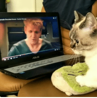 """Cute, Gordon Ramsay, and Tumblr: <p><a href=""""http://cognitivedissonance.tumblr.com/post/161130869275/jackmeister-thenatsdorf-making-biscuits-with"""" class=""""tumblr_blog"""">cognitivedissonance</a>:</p> <blockquote> <p><a href=""""http://jackmeister.tumblr.com/post/161098741815/thenatsdorf-making-biscuits-with-gordon-ramsay"""" class=""""tumblr_blog"""">jackmeister</a>:</p> <blockquote> <p><a href=""""http://natsdorf.com/post/161062726893/making-biscuits-with-gordon-ramsay"""" class=""""tumblr_blog"""">thenatsdorf</a>:</p> <blockquote><p>Making biscuits with Gordon Ramsay.</p></blockquote>  <p>This is it. The best video on the web.</p> </blockquote>  <p>Your cute cat of the day</p> </blockquote>"""