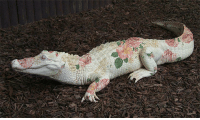 """Target, Tumblr, and Alligator: <p><a href=""""http://disgustinganimals.tumblr.com/post/104182882393/oldmanstephanie-follow-for-more-soft"""" class=""""tumblr_blog"""" target=""""_blank"""">disgustinganimals</a>:</p><blockquote><p><a href=""""http://oldmanstephanie.tumblr.com/post/102648109782/follow-for-more-soft-alligator"""" class=""""tumblr_blog"""" target=""""_blank"""">oldmanstephanie</a>:</p><blockquote> <p>follow for more soft alligator</p> </blockquote> <p>this is okay.</p></blockquote>"""