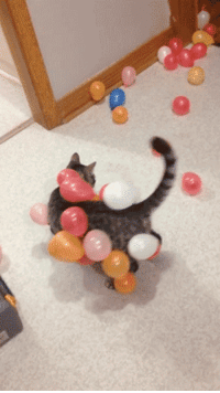 """Tumblr, youtube.com, and Blog: <p><a href=""""http://gifsboom.net/post/115141905299/static-balloon-cat-video"""" class=""""tumblr_blog"""">gifsboom</a>:</p>  <blockquote><p>Static balloon cat. [<a href=""""https://www.youtube.com/watch?v=AqXWTYYM-ps"""">video</a>]<br/></p></blockquote>"""