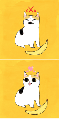 "<p><a href=""http://gotsickofmyoldurl.tumblr.com/post/170800701101/chuckdrawsthings-the-duality-of-cat-for-those"" class=""tumblr_blog"">gotsickofmyoldurl</a>:</p><blockquote> <p><a href=""http://chuckdrawsthings.tumblr.com/post/170693393843/the-duality-of-cat"" class=""tumblr_blog"">chuckdrawsthings</a>:</p> <blockquote><p>the duality of cat</p></blockquote> <p>for those unaware of the recent meme development</p> <figure class=""tmblr-full"" data-orig-height=""405"" data-orig-width=""706""><img src=""https://78.media.tumblr.com/c00cff490bb25f6a54b67ddab6f53dd2/tumblr_inline_p41q1gu4rm1qi1nux_540.png"" data-orig-height=""405"" data-orig-width=""706""/></figure><p>the cat evidently changed her stance on banana</p> </blockquote> <h2>¿El plátano hace a los gatos bipolares?</h2>: <p><a href=""http://gotsickofmyoldurl.tumblr.com/post/170800701101/chuckdrawsthings-the-duality-of-cat-for-those"" class=""tumblr_blog"">gotsickofmyoldurl</a>:</p><blockquote> <p><a href=""http://chuckdrawsthings.tumblr.com/post/170693393843/the-duality-of-cat"" class=""tumblr_blog"">chuckdrawsthings</a>:</p> <blockquote><p>the duality of cat</p></blockquote> <p>for those unaware of the recent meme development</p> <figure class=""tmblr-full"" data-orig-height=""405"" data-orig-width=""706""><img src=""https://78.media.tumblr.com/c00cff490bb25f6a54b67ddab6f53dd2/tumblr_inline_p41q1gu4rm1qi1nux_540.png"" data-orig-height=""405"" data-orig-width=""706""/></figure><p>the cat evidently changed her stance on banana</p> </blockquote> <h2>¿El plátano hace a los gatos bipolares?</h2>"
