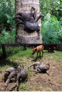 "Tumblr, Blog, and Http: <p><a href=""http://lastsonlost.tumblr.com/post/158467525962/woodelf68-sixpenceee-coconut-crabs-can-grow"" class=""tumblr_blog"">lastsonlost</a>:</p>  <blockquote><p><a href=""http://mojave-wasteland-official.tumblr.com/post/158467406779/woodelf68-sixpenceee-coconut-crabs-can-grow"" class=""tumblr_blog"">mojave-wasteland-official</a>:</p><blockquote> <p><a href=""http://woodelf68.tumblr.com/post/120928676279/sixpenceee-coconut-crabs-can-grow-up-to-1-meter"" class=""tumblr_blog"">woodelf68</a>:</p> <blockquote> <p><a href=""http://sixpenceee.com/post/120785671686/coconut-crabs-can-grow-up-to-1-meter-in-length"" class=""tumblr_blog"">sixpenceee</a>:</p>  <blockquote> <p><b>Coconut crabs</b> can grow up to 1 meter in length from leg tip to leg tip  </p> <p><a href=""http://1417240889.rsc.cdn77.org/wp-content/uploads/2015/05/Coconut-Crab.jpg"">(Source)</a></p> </blockquote>  <p>PLEASE TELL ME WHAT COUNTRY I NEED TO AVOID SO I NEVER MEET ONE OF THESE CREATURES. *RUNS SCREAMING IN THE OTHER DIRECTION*</p> </blockquote> <p>You have to go outside first. </p> </blockquote> <p>so like really is an MMO</p></blockquote>  <p>If I have to go to whatever country this is I&rsquo;m bringing the biggest gun I can find so I can blow these mfs away.</p>"