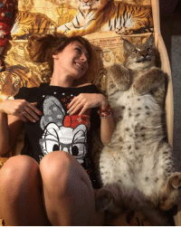 """<p><a href=""""http://laughoutloud-club.tumblr.com/post/157246681795/a-russian-girl-and-her-lynx"""" class=""""tumblr_blog"""">laughoutloud-club</a>:</p>  <blockquote><p>A Russian Girl and her Lynx</p></blockquote>: <p><a href=""""http://laughoutloud-club.tumblr.com/post/157246681795/a-russian-girl-and-her-lynx"""" class=""""tumblr_blog"""">laughoutloud-club</a>:</p>  <blockquote><p>A Russian Girl and her Lynx</p></blockquote>"""