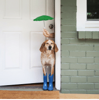 """<p><a href=""""http://maddieonthings.com/post/119451918268/maddie-is-all-ready-for-the-spring-rain"""" class=""""tumblr_blog"""" target=""""_blank"""">maddieonthings</a>:</p>  <blockquote><p>Maddie is all ready for the spring rain 💫</p></blockquote>: <p><a href=""""http://maddieonthings.com/post/119451918268/maddie-is-all-ready-for-the-spring-rain"""" class=""""tumblr_blog"""" target=""""_blank"""">maddieonthings</a>:</p>  <blockquote><p>Maddie is all ready for the spring rain 💫</p></blockquote>"""