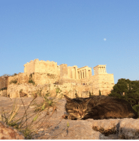 """<p><a href=""""http://newfavething.tumblr.com/post/161518195724/cat-snoozing-in-front-of-the-acropolis"""" class=""""tumblr_blog"""">newfavething</a>:</p><blockquote><p>cat snoozing in front of the Acropolis 