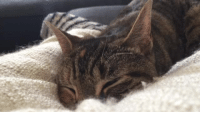 """<p><a href=""""http://rhube.tumblr.com/post/158017595573/stephendann-wehavecats-saturday-morning-purr"""" class=""""tumblr_blog"""" target=""""_blank"""">rhube</a>:</p> <blockquote> <p><a class=""""tumblr_blog"""" href=""""http://stephendann.tumblr.com/post/142608151378"""" target=""""_blank"""">stephendann</a>:</p> <blockquote> <p><a class=""""tumblr_blog"""" href=""""http://wehavecats.tumblr.com/post/112325499178"""" target=""""_blank"""">wehavecats</a>:</p> <blockquote> <p>Saturday morning purr sesh (make sure to turn on the sound)</p> </blockquote> <p>blankie is best blankie ever</p> </blockquote> <p>i could tell even before turning on the sound that cat is indescribably happy.<br/></p> </blockquote>: <p><a href=""""http://rhube.tumblr.com/post/158017595573/stephendann-wehavecats-saturday-morning-purr"""" class=""""tumblr_blog"""" target=""""_blank"""">rhube</a>:</p> <blockquote> <p><a class=""""tumblr_blog"""" href=""""http://stephendann.tumblr.com/post/142608151378"""" target=""""_blank"""">stephendann</a>:</p> <blockquote> <p><a class=""""tumblr_blog"""" href=""""http://wehavecats.tumblr.com/post/112325499178"""" target=""""_blank"""">wehavecats</a>:</p> <blockquote> <p>Saturday morning purr sesh (make sure to turn on the sound)</p> </blockquote> <p>blankie is best blankie ever</p> </blockquote> <p>i could tell even before turning on the sound that cat is indescribably happy.<br/></p> </blockquote>"""