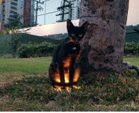 """<p><a href=""""http://sixpenceee.com/post/160164072628/a-cat-sitting-on-a-ground-light-source"""" class=""""tumblr_blog"""">sixpenceee</a>:</p><blockquote><p>A cat sitting on a ground light source.<br/></p></blockquote>  <p>Pet him to engage side quest</p>: <p><a href=""""http://sixpenceee.com/post/160164072628/a-cat-sitting-on-a-ground-light-source"""" class=""""tumblr_blog"""">sixpenceee</a>:</p><blockquote><p>A cat sitting on a ground light source.<br/></p></blockquote>  <p>Pet him to engage side quest</p>"""